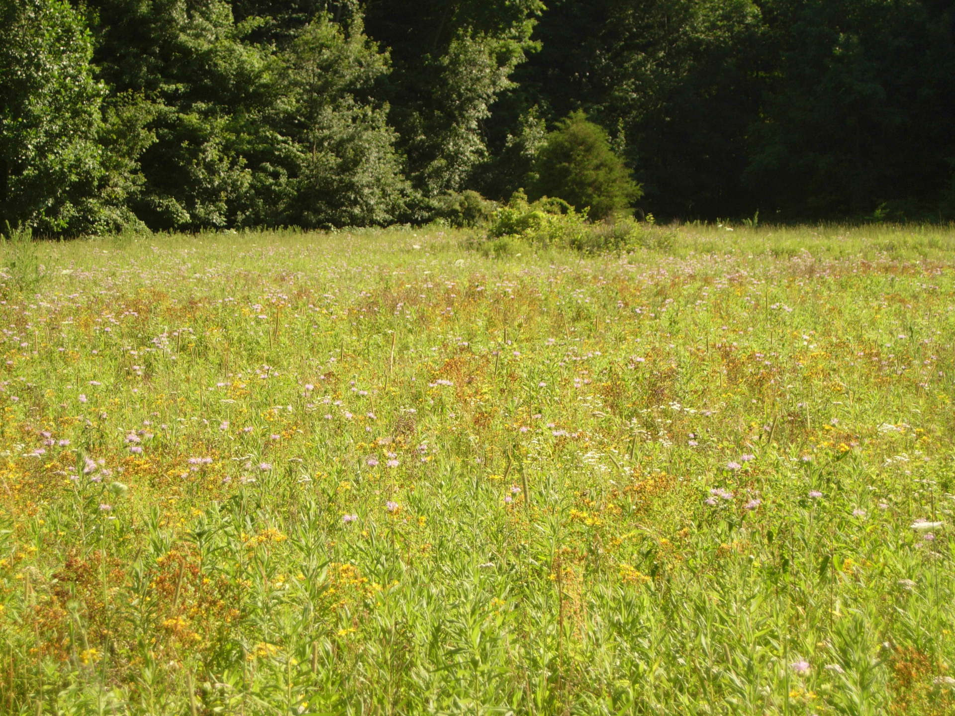 Prairie restoration professionally managed
