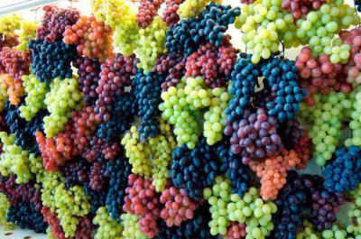 Grapes - a wonderful treat full of nutrients