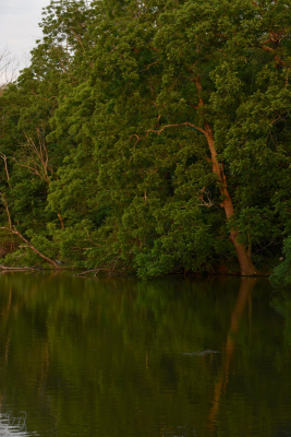 |Tree Lake|