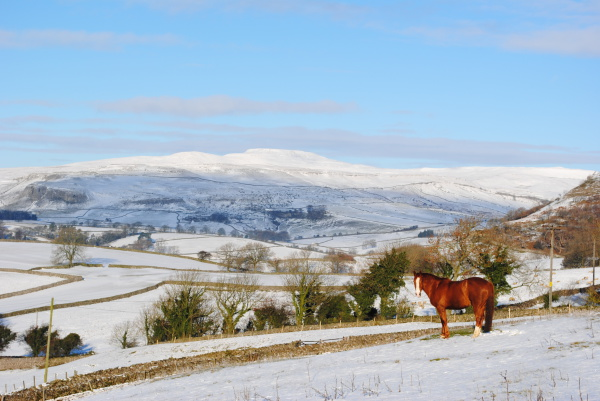 horse, livery, snow