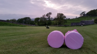 Pink bales for breast cancer research