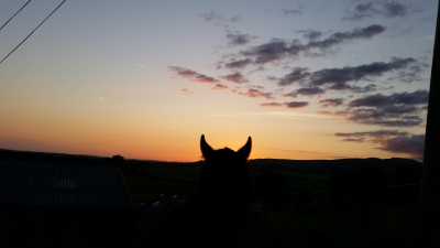 horses, livery, rawlinshaw