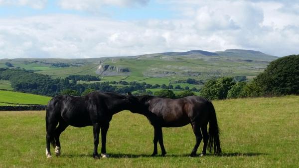 Horses, DIY Livery, Rawlinshaw