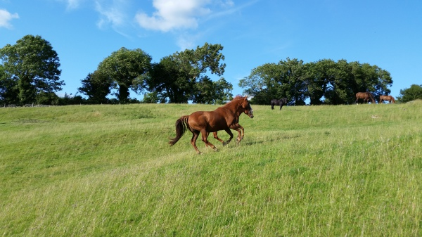 Cantering Chestnuts