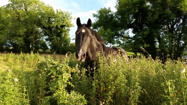 Horse, livery, grazing, settle, north yorkshire, lancashire