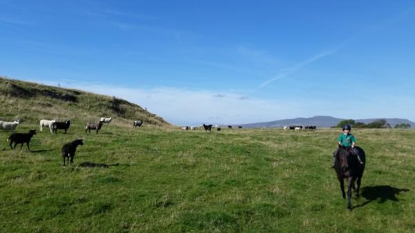 Tom checking his sheep