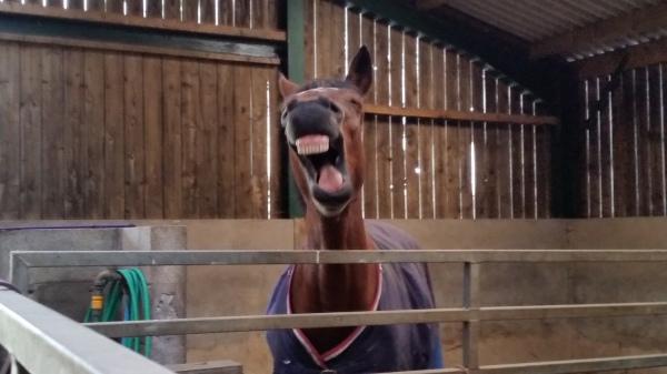 Laughing Tekoda