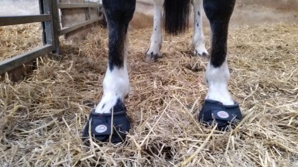 Fancy New Shoes
