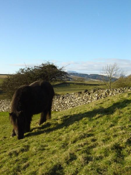 pony, ponies, livery, DIY livery, rawlinshaw farm