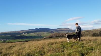 Diary, november, yorkshire, farm, rawlinshaw, sheep zwartbles, texels
