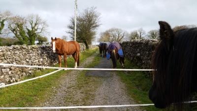 rawlinshaw, settle, horses, livery