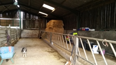 Straw in place