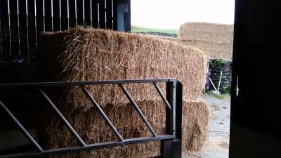 straw bales, telehandler, livery