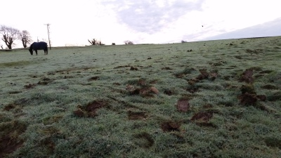 horses, damage to field