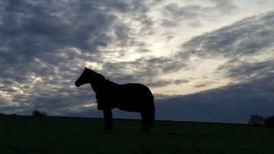 Horses, livery, yorkshire