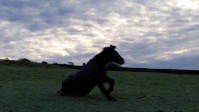 horses, livery yorkshire