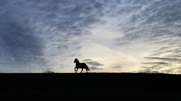 horse, livery, frost, yorkshire