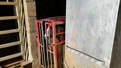 sheep, ewes, pregnancy, scanning, pregnancy scanning sheep