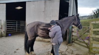 horse, clip, design, pegasus