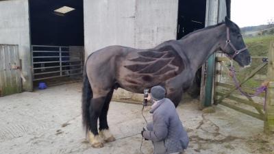 horses, clip, designs, pegasus