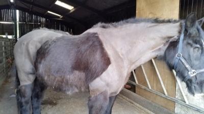 horse, clip