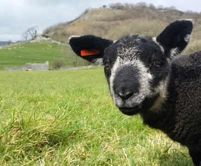 rawlinshaw lambs yorkshire yorkshirepost