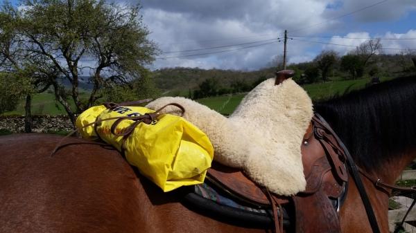 western saddle, rawlinshaw, horses