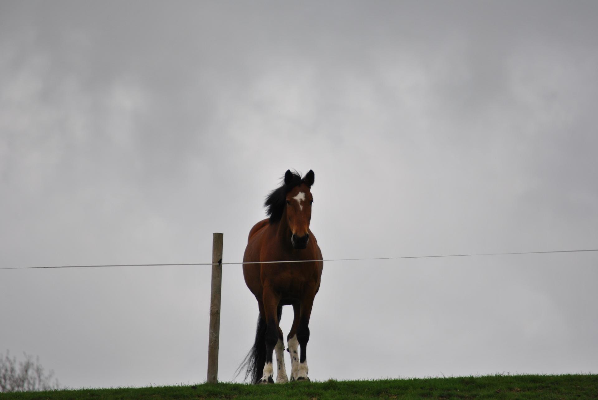 Koda, horses rawlinshaw