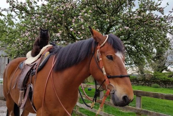 sooty, koda, rawlinshaw, horses