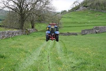 Mole ploughing