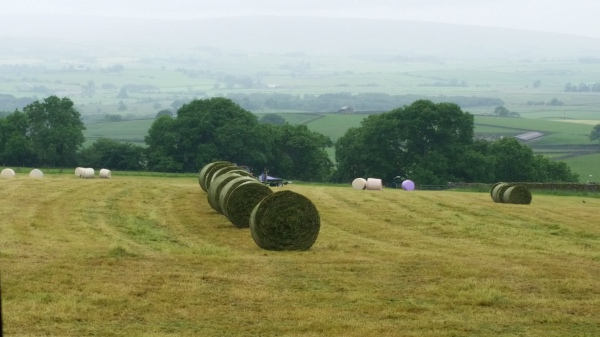 Bales lined up ready to be wrapped