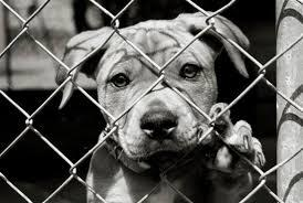 New Animal Abuse Registry in Tennessee