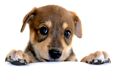 pet portraits pet photography doggy birthday parties pet photos brighton pet photographer brighton pet photography