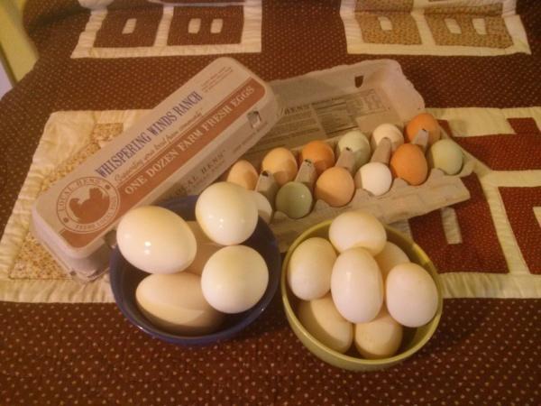 Goose, Duck & Chicken Eggs!