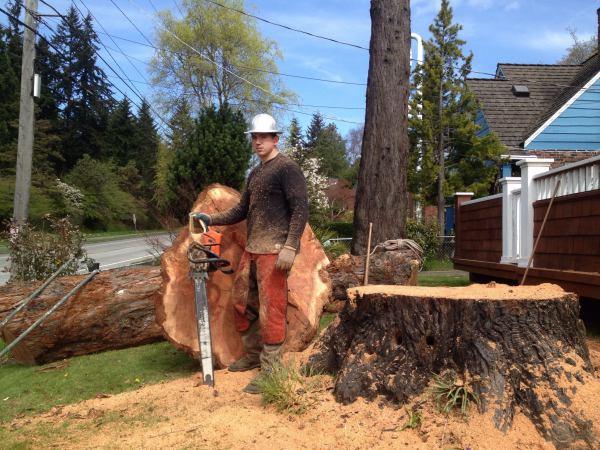 Tree Removal, Arborist