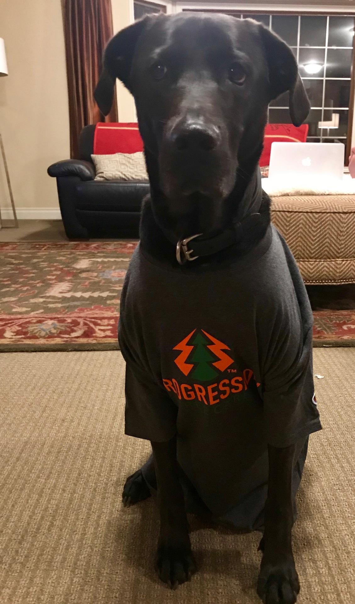 Boss Dog