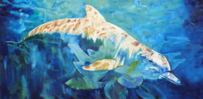 #dolphin#ocean#sea#blue#light