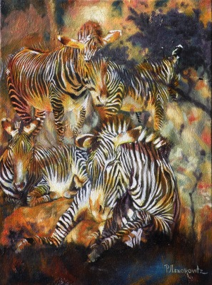 zebra,zebras.wildlife,animals