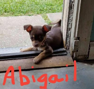 Abigail (D0559)