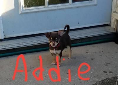 Addie (D0557)