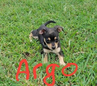 Argo (D0561)