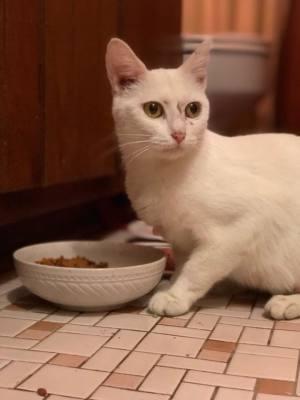 Mama Kitty (C0049)