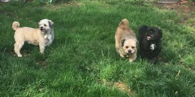 The Three Amigos (D0803, D0804, D0805)