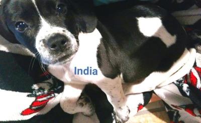 India (D0971)