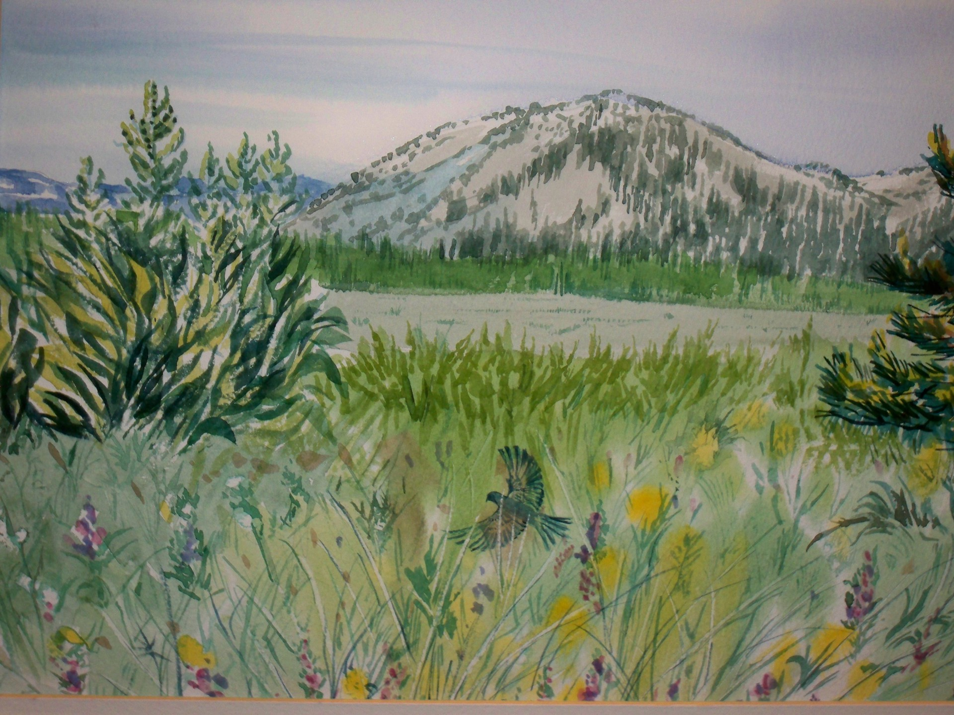 MOUNT ROSE MEADOWS