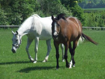 Choosing a sire for your mare.