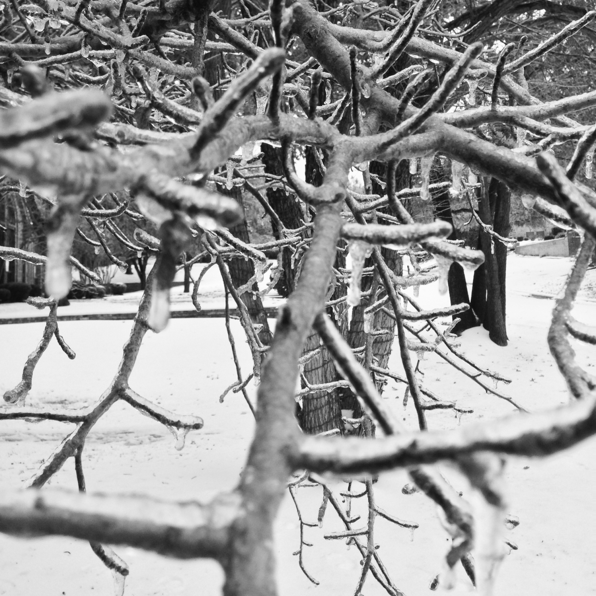 black and white, tree, ice, macro