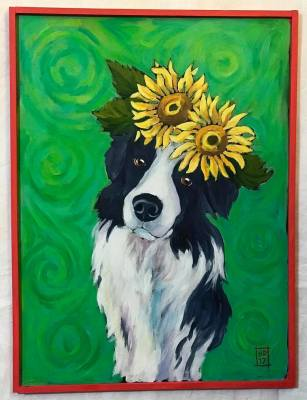 Border Collie with Sunflowers