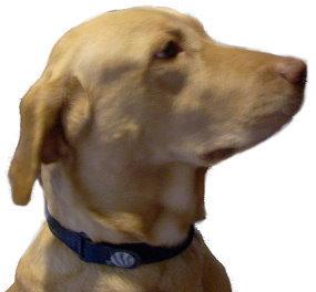 Pet Collar
