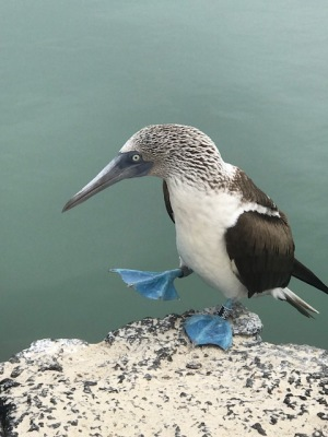 Galapagos Report - Day Nine - Boobies and Sharks Closeups